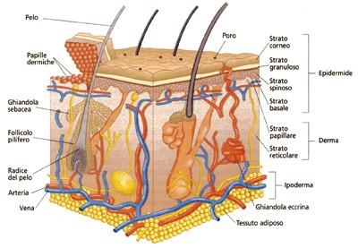 Miele dopo eliminazione di emorroidi