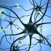 150629_brain_neurons